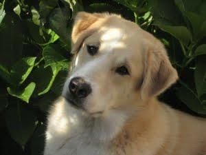 veelgestelde vragen over vaccineren hond