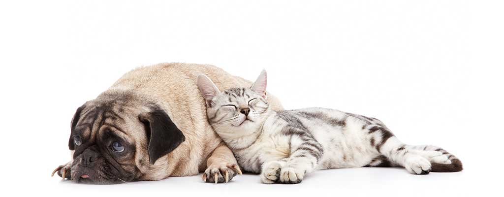 kat en hond - delta dierenartsen dronten en biddinghuizen