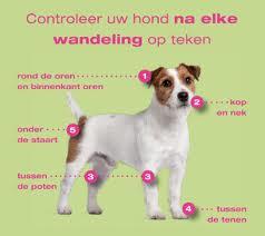 controleer-hond-teken