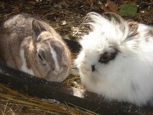 konijnen minimaal per twee
