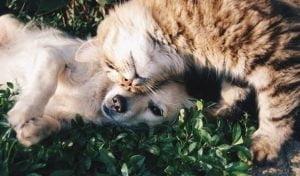 bescherm-uw-huisdier-tegen-de-vlo-en-de-teek