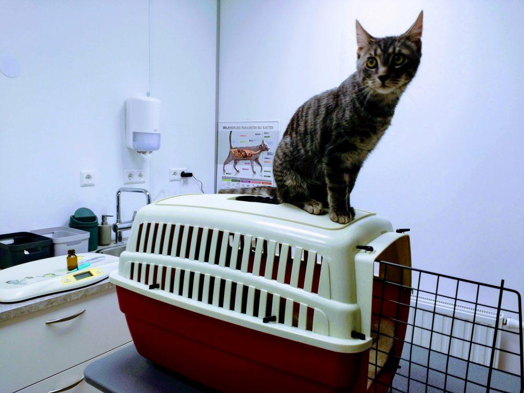 katten spreekkamer delta dierenartsen