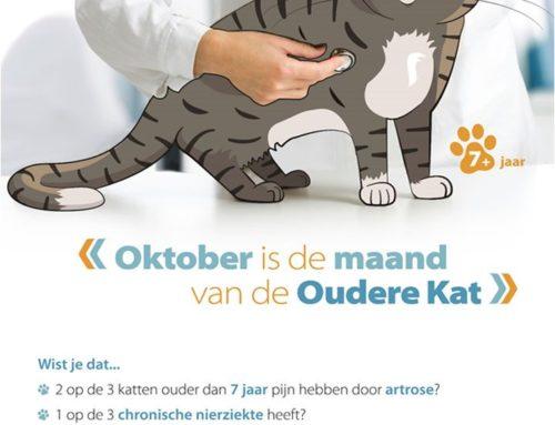 Maand van de oudere kat: oktober