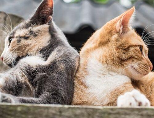Kattenziekte in Dronten
