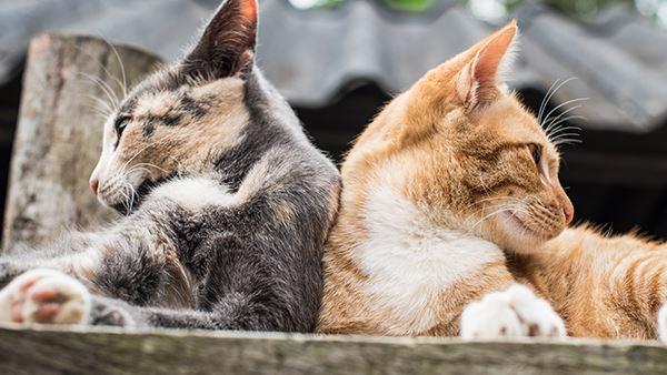 kattenziekte dronten